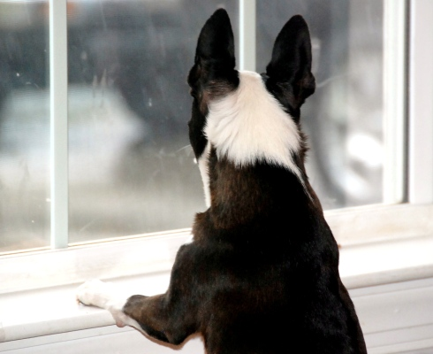 PeeWee enjoyed watching the snow falling, but he didn't want to go outside in it!