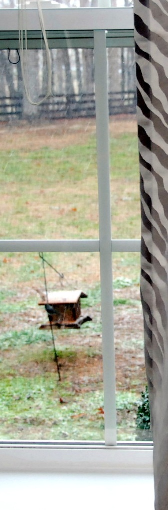 The bird feeder is right outside our bedroom window so we can watch them from bed in the mornings.