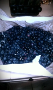 4 pounds of blueberries!