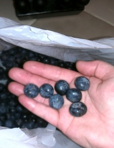 These were some big berries!