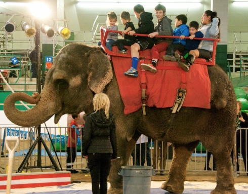 Charlie, Maddie, and Noah riding on an elephant at the Shriner's circus in November!