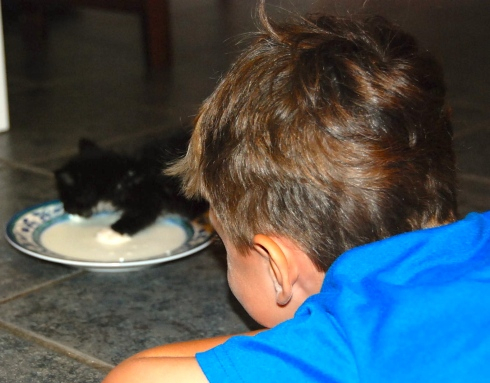 Charlie feeding Baby Kitty in July.  Baby Kitty is big and fluffy now, and Charlie and Maddie love him so much.